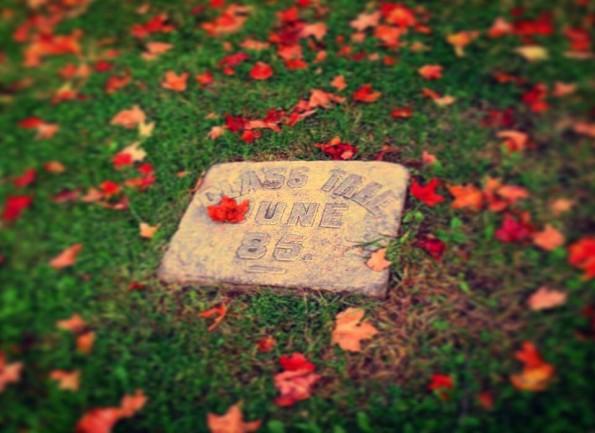 fall-pic
